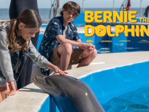 """Bernie the Dolphin"""